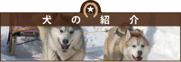 犬の紹介*